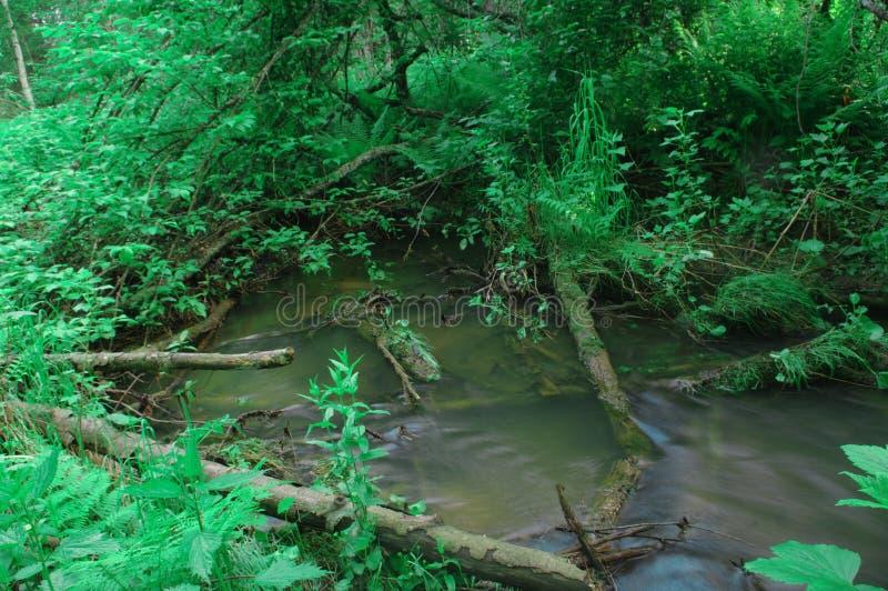L'eau de crique verdit la végétation d'humidité de troncs d'arbre photos stock