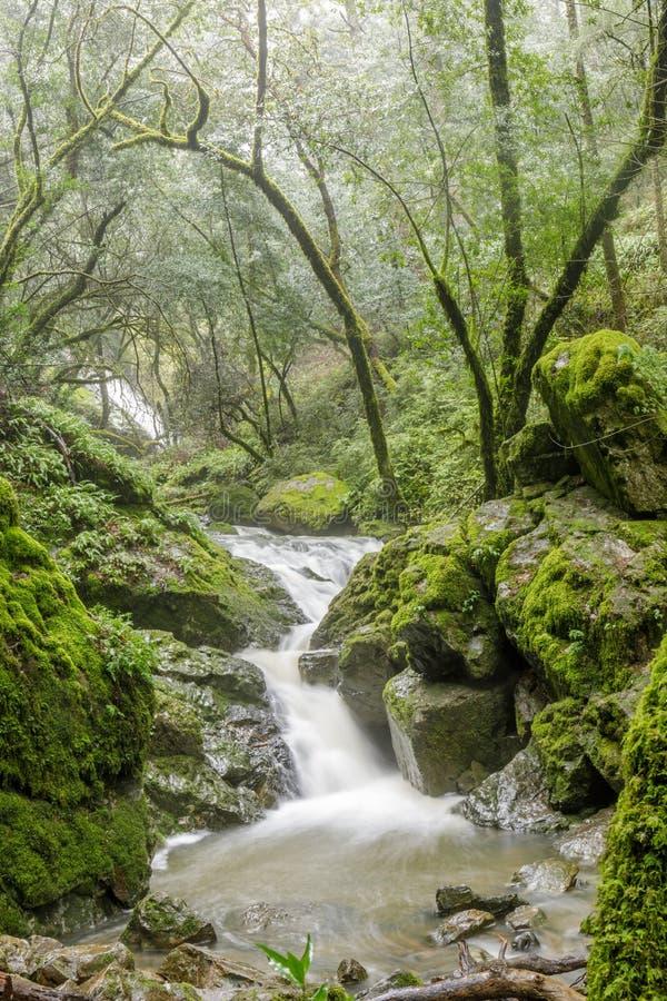 L'eau de jaillissement dans la cataracte automnes après des pluies d'hiver photographie stock