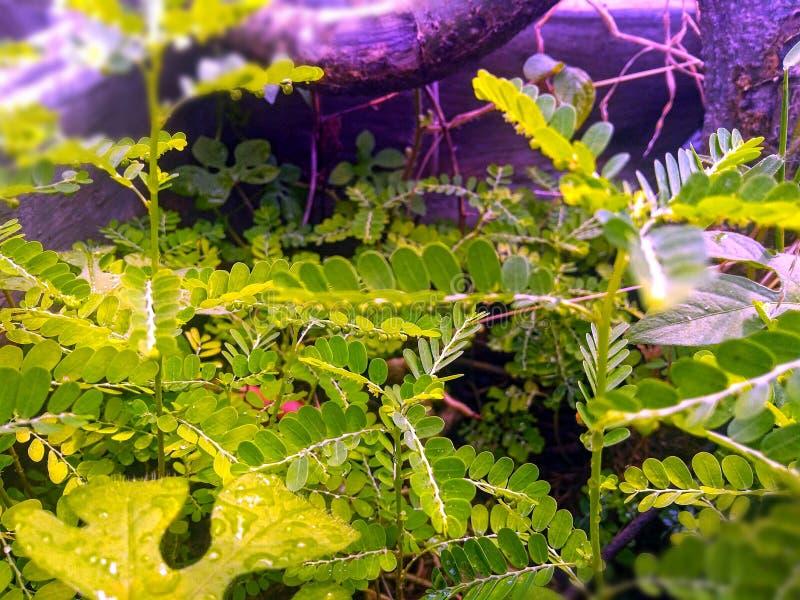 L'eau de pluie image stock