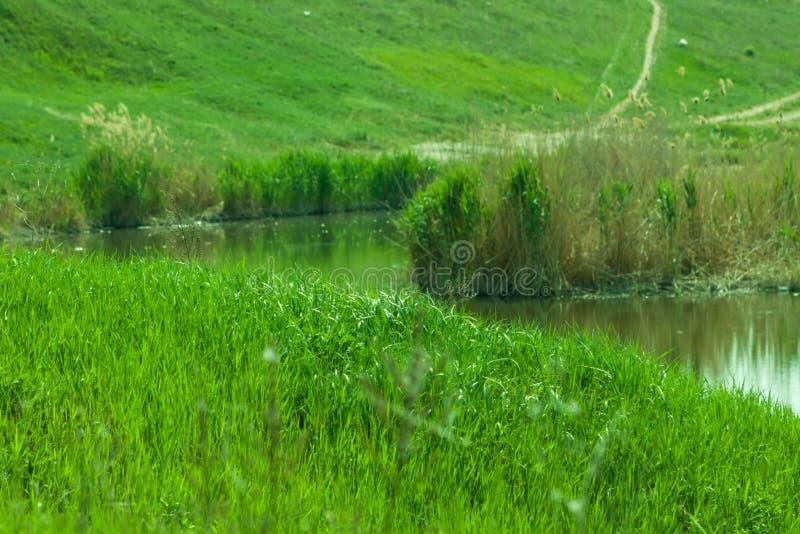 L'eau de pré d'herbe verte image libre de droits