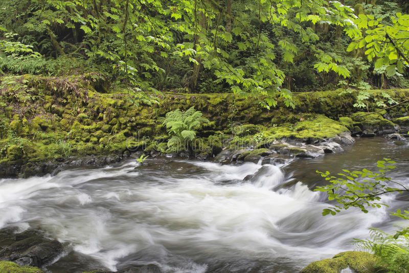 L'eau de précipitation chez Cedar Creek Washington State image libre de droits