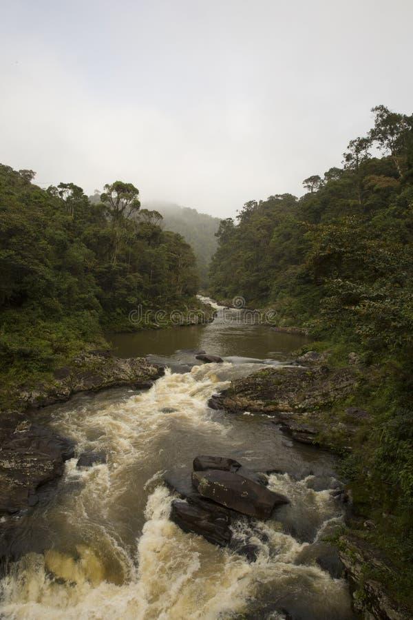 L'eau de précipitation par la jungle image stock