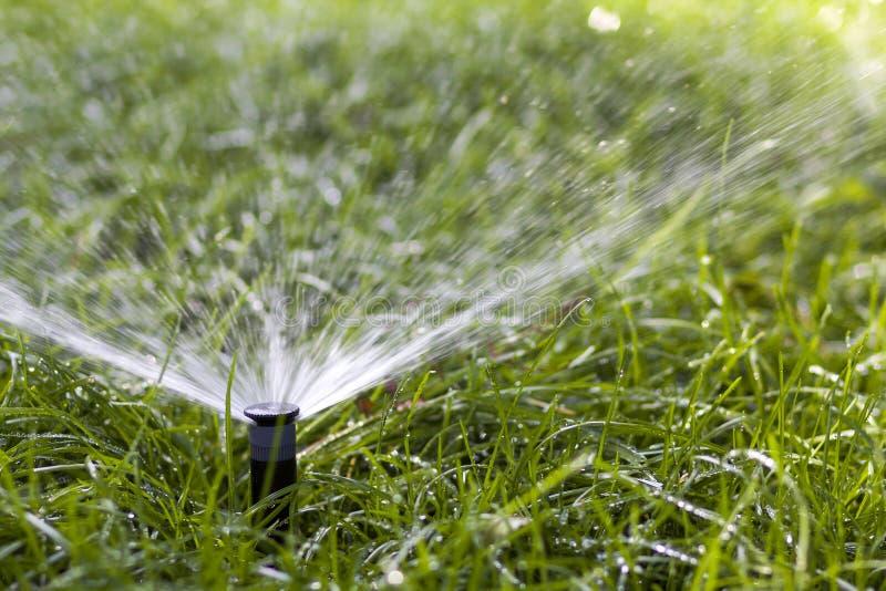 L'eau de pulvérisation d'arroseuse de l'eau de pelouse au-dessus de l'herbe dans le jardin un jour chaud d'été Pelouses de arrosa photos stock