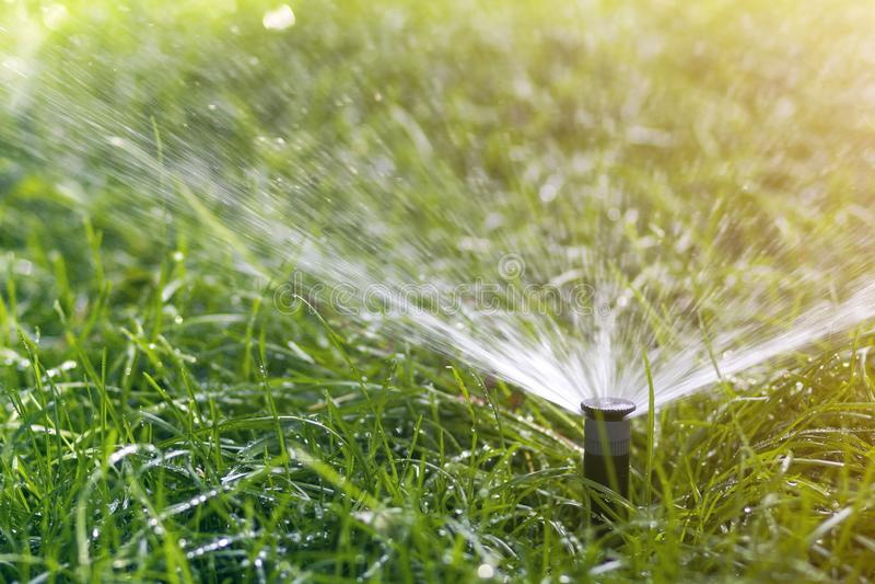 L'eau de pulvérisation d'arroseuse de l'eau de pelouse au-dessus de l'herbe fraîche de vert de pelouse dans le jardin ou l'arrièr photos stock