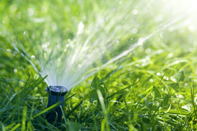 L'eau de pulvérisation d'arroseuse de l'eau de pelouse au-dessus de l'herbe fraîche de vert de pelouse dans le jardin ou l'arrièr image stock