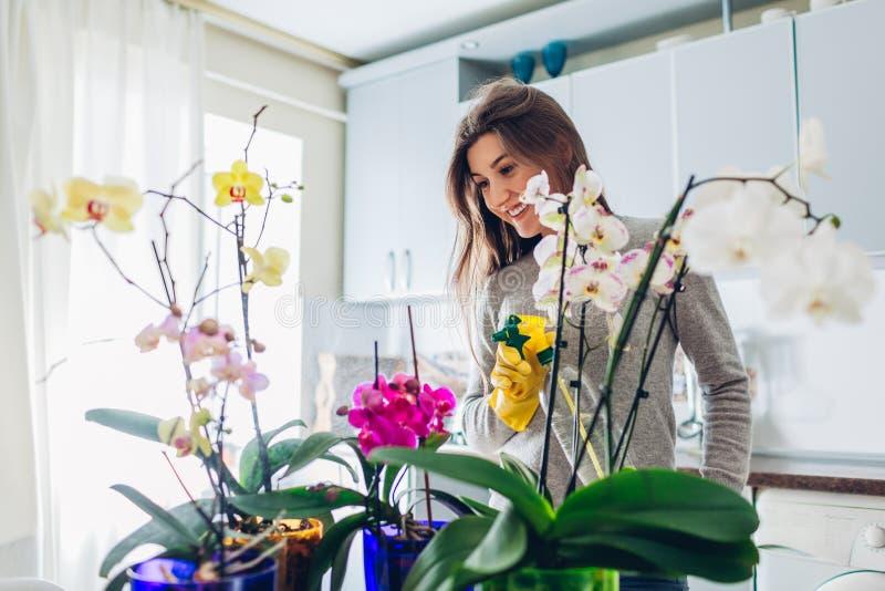 L'eau de pulvérisation de femme sur des orchidées sur la cuisine Houswife prenant soin des usines à la maison photo stock