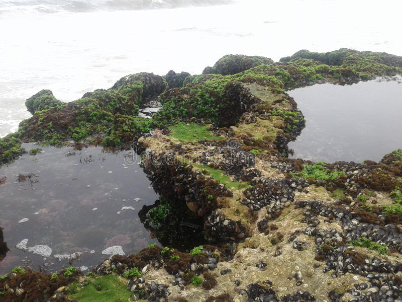 Download L'eau De Roche De Poissons De Plage De Nature Image stock - Image du poissons, promontoire: 77150111