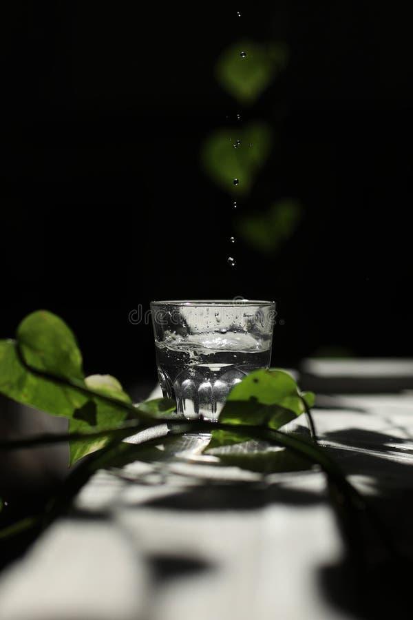 L'eau de scintillement étant versée dans un verre contre un verre de l'eau sur un fond foncé parmi les feuilles vertes images libres de droits