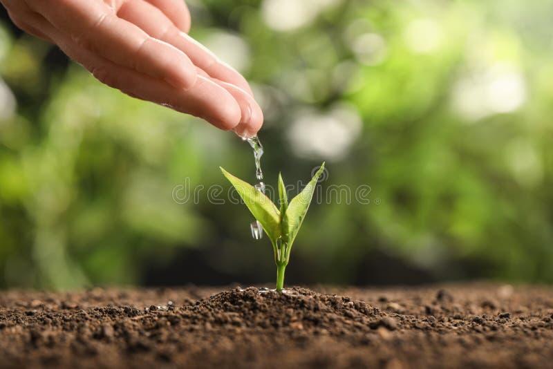 L'eau de versement d'agriculteur sur la jeune jeune plante dans le sol sur le fond brouillé L'espace pour le texte image stock