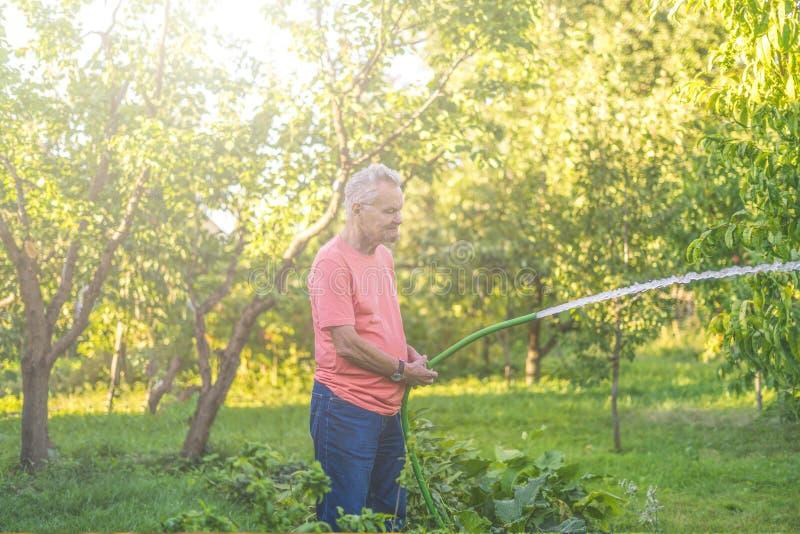 L'eau de versement de vieil agriculteur masculin supérieur le jour d'été images libres de droits