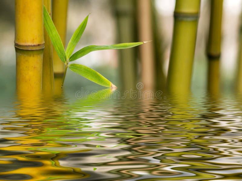 l'eau en bambou de réflexion photos stock