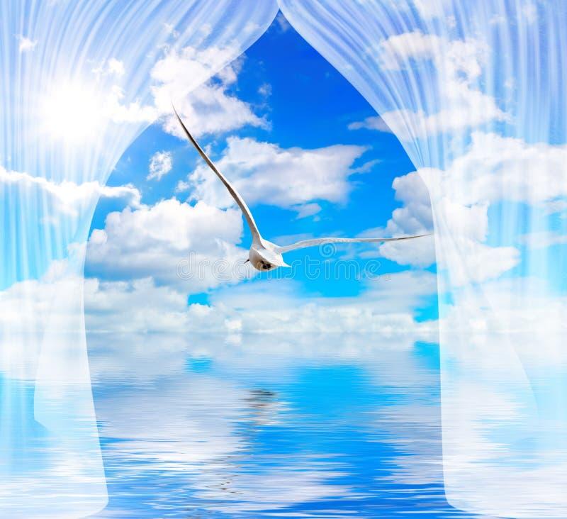 L'eau et le soleil de mouette par le rideau image stock