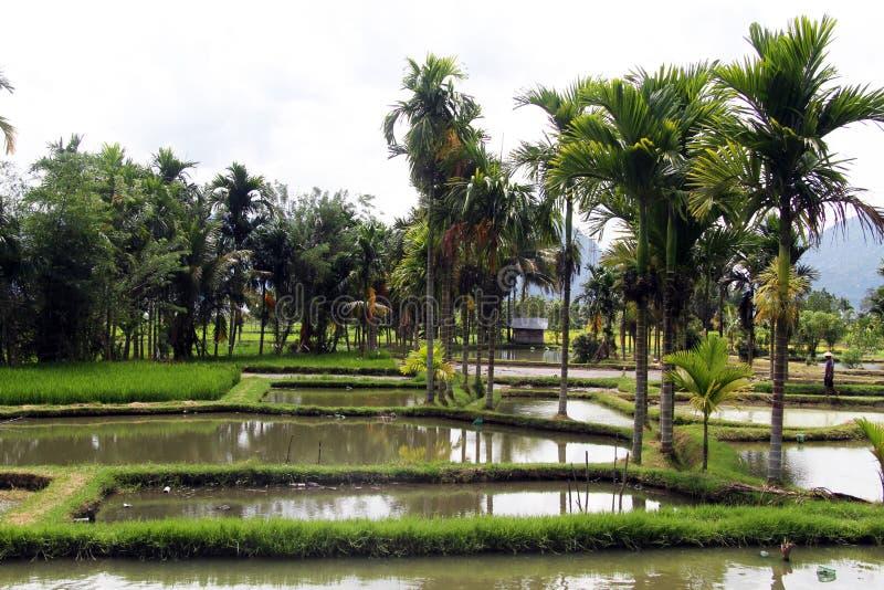 L'eau et palmiers photo stock