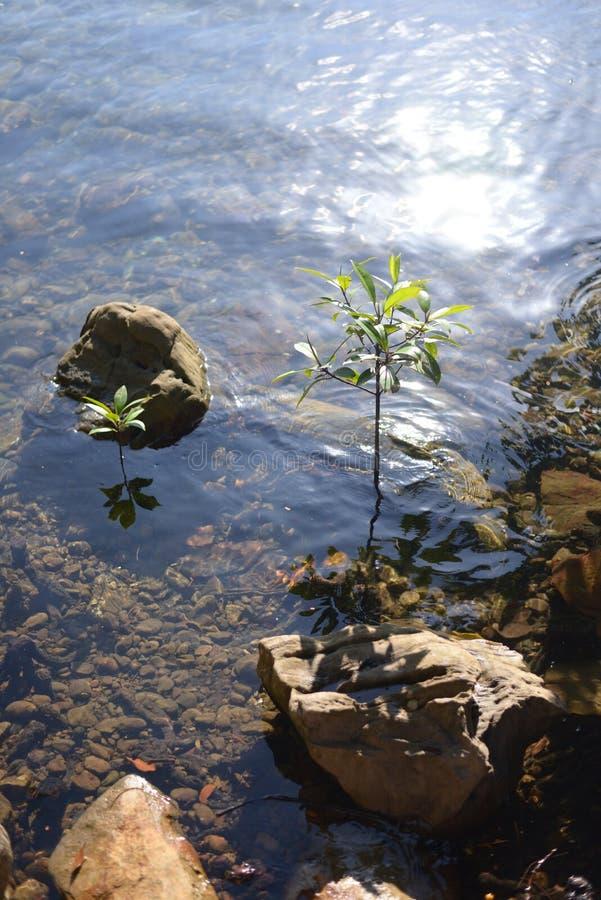 L'eau et pierre images stock