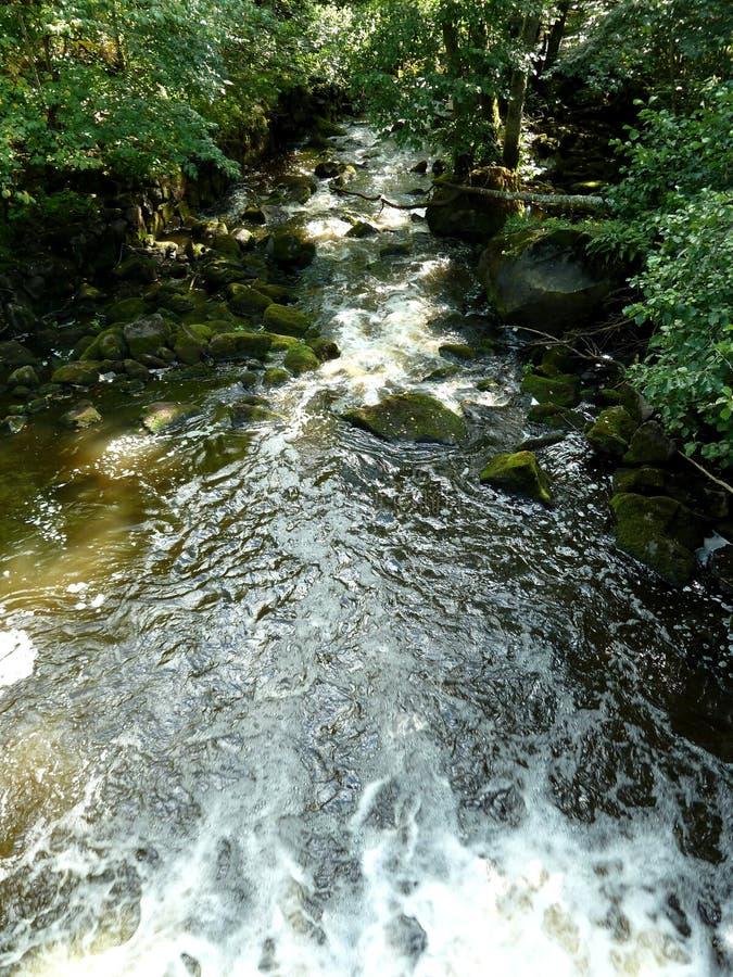 L'eau fluide dans la forêt images stock