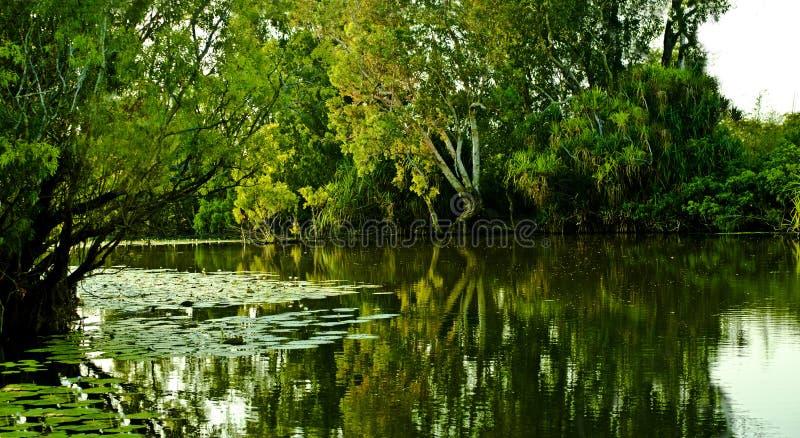L'eau jaune photos libres de droits