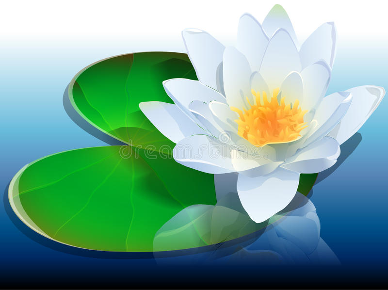 L'eau lilly illustration libre de droits