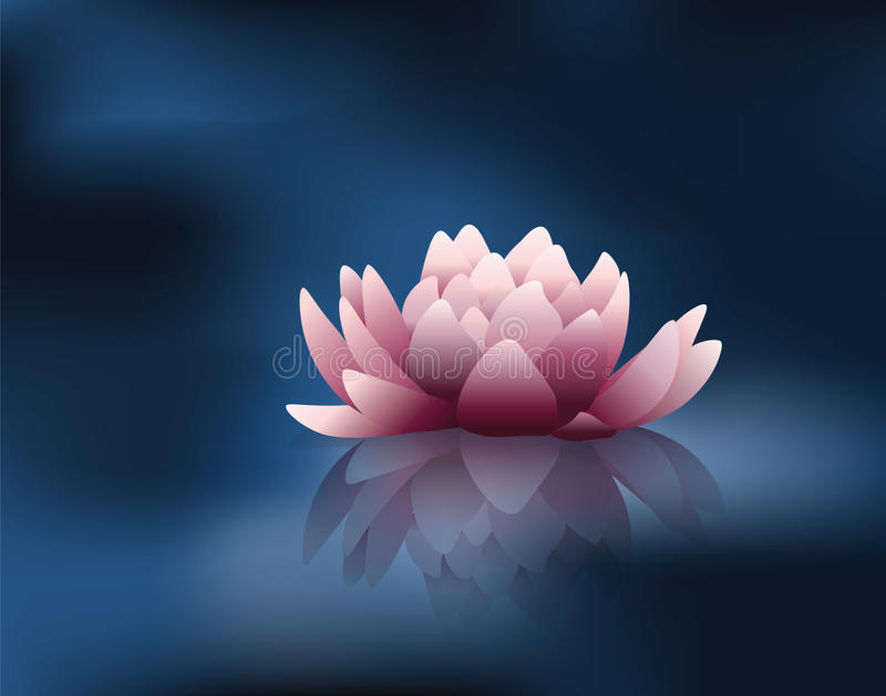 L'eau Lily Flower illustration stock