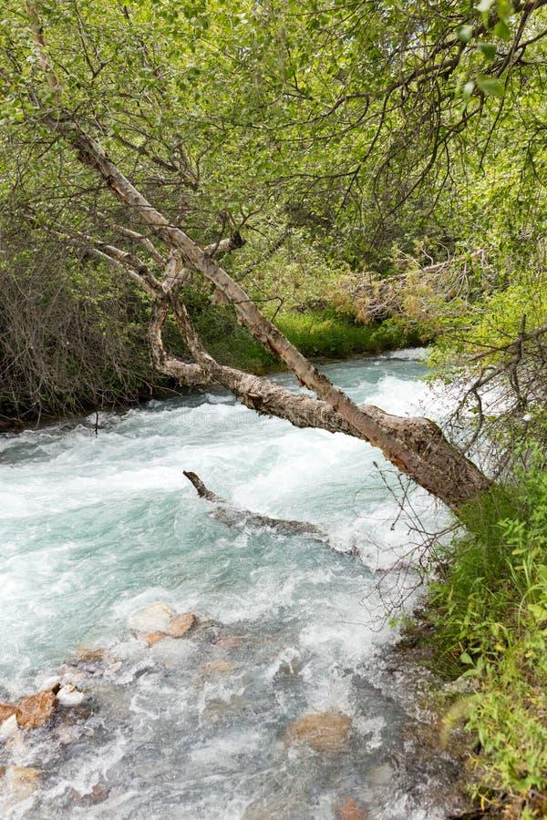 L'eau rugueuse en rivière de montagne photographie stock libre de droits