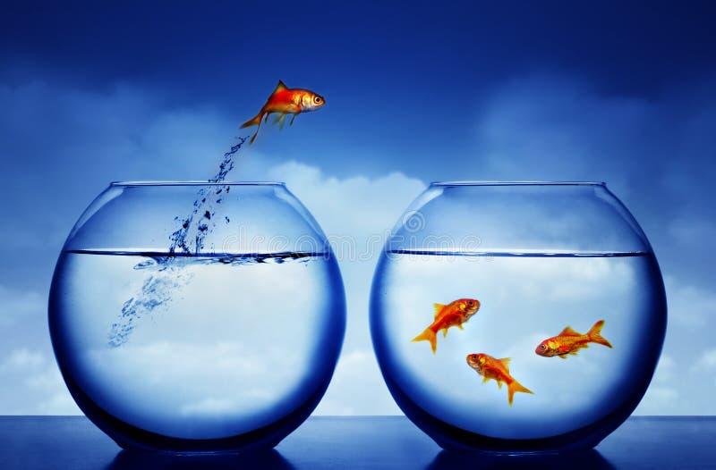 l'eau sautante de goldfish photos libres de droits