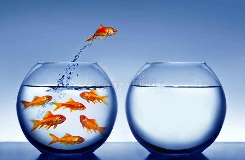 l'eau sautante de goldfish image stock
