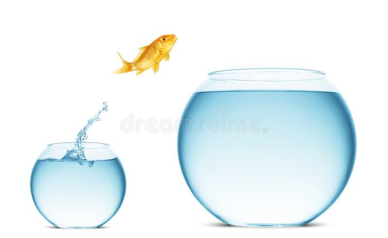 l'eau sautante de goldfish photo stock