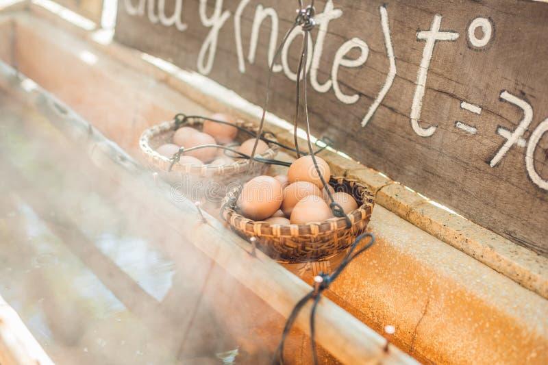 L'eau thermique souterraine naturelle chaude est employée pour bouillir des oeufs de poulet dans un certain secteur d'activité vo photos stock