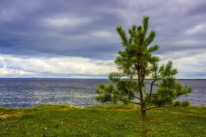 L'eau toujours du lac Ladoga, herbe verte, ciel gris, un pin simple, République de la Carélie, nord-ouest russe photographie stock