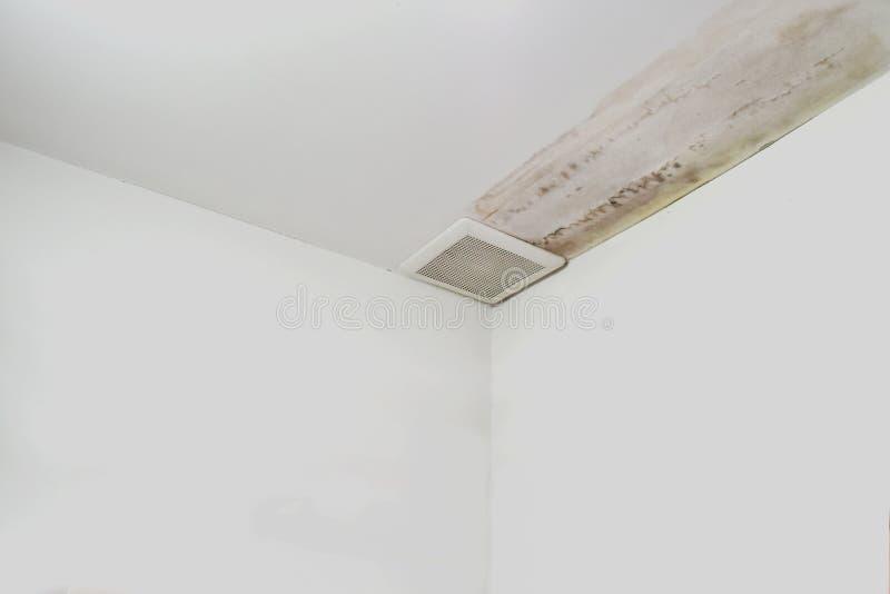 L'eccessiva umidità può causare la parete della pittura della sbucciatura e della muffa, quali le perdite dell'acqua piovana o le immagine stock