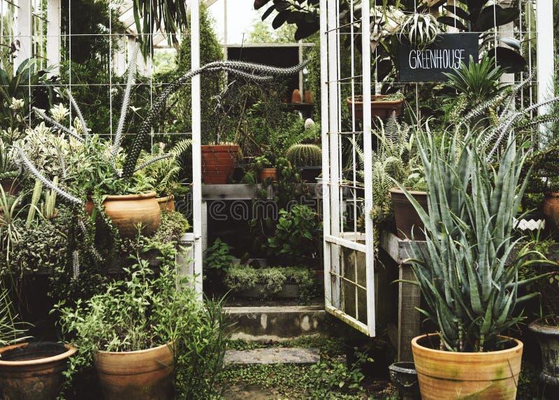 L'ecologia della serra pianta l'ambiente della natura fotografia stock
