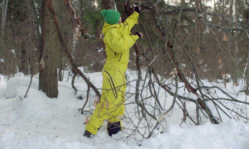 L'ecologo esamina un albero nocivo nella foresta immagini stock libere da diritti