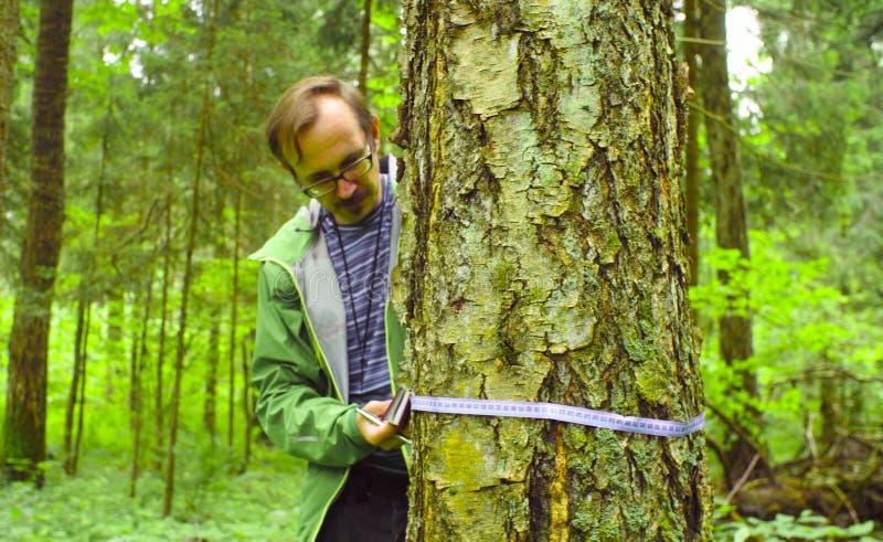 L'ecologo in una foresta che misura un tronco di albero immagini stock