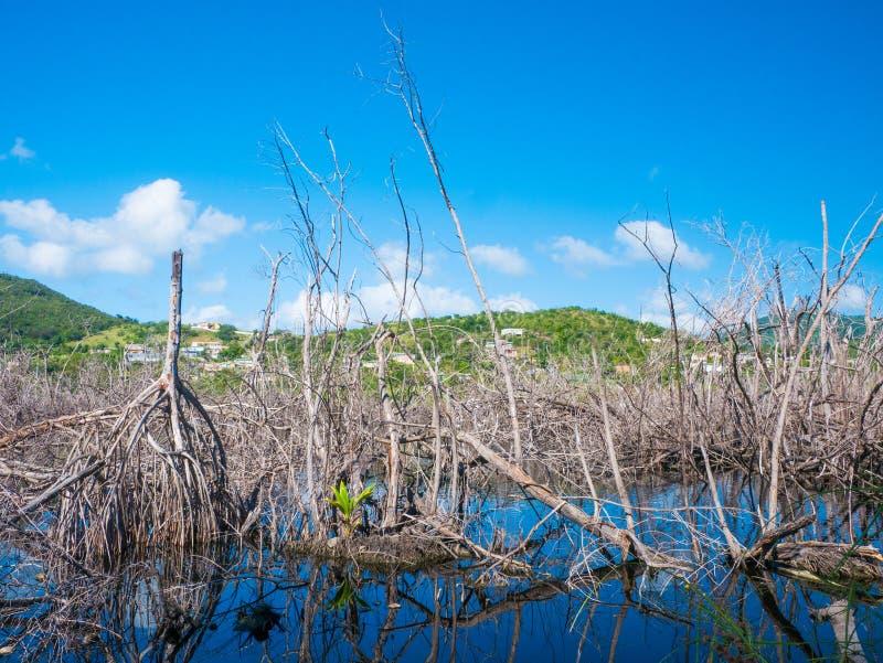 L'ecosistema si è distrutto dall'uragano Maria, Punta Tuna Wetlands Nature Reserve - Puerto Rico - U.S.A. fotografie stock