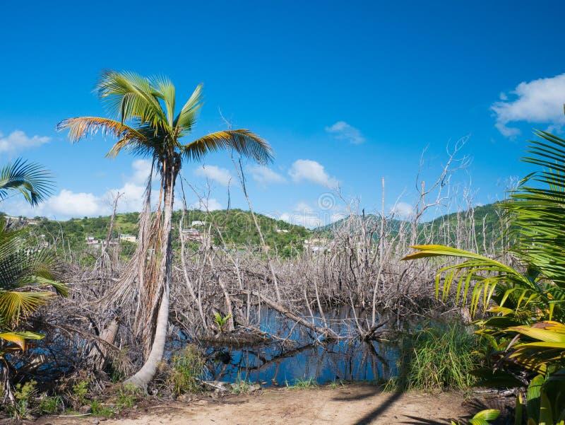 L'ecosistema si è distrutto dall'uragano Maria, Punta Tuna Wetlands Nature Reserve - Puerto Rico - U.S.A. immagini stock libere da diritti