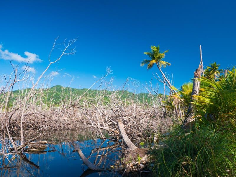 L'ecosistema si è distrutto dall'uragano Maria, Punta Tuna Wetlands Nature Reserve - Puerto Rico - U.S.A. fotografia stock libera da diritti