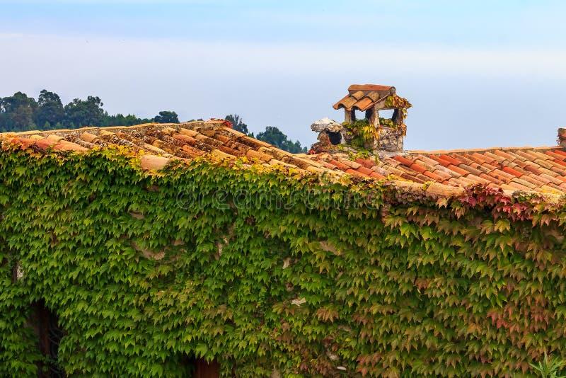 L'edera ha coperto la parete medievale nel villaggio di Eze nel sud della Francia fotografia stock libera da diritti