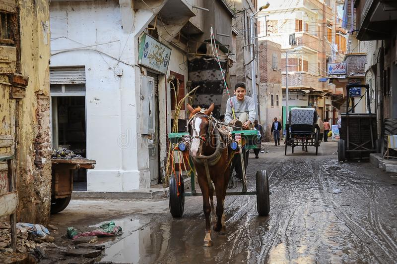 L'Egitto, Alessandria d'Egitto - 3 gennaio 2009: Il driver su un carretto estratto dal cavallo in un vicolo sporco e povero in un fotografie stock