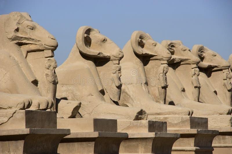 L'Egitto antico, viale degli Sphinxes, corsa fotografie stock