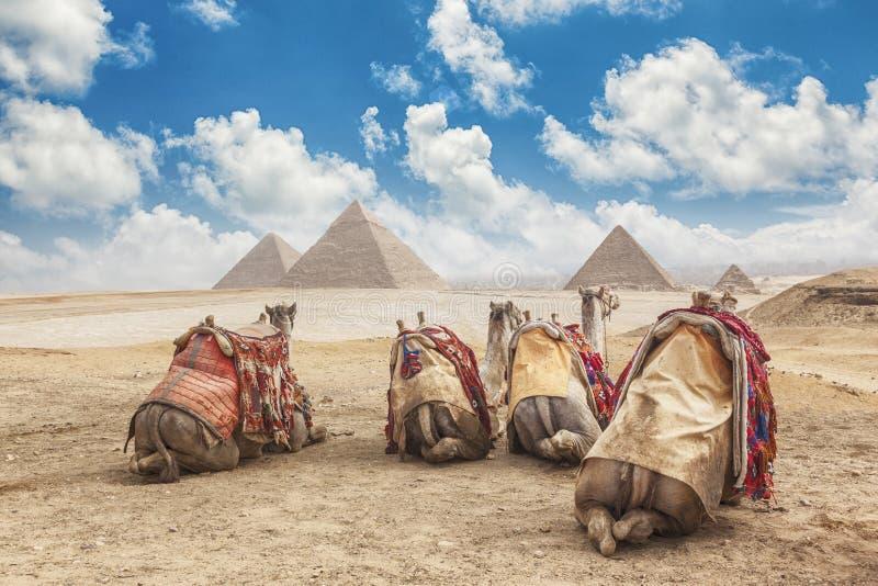 L'Egitto Il Cairo - Giza immagine stock libera da diritti