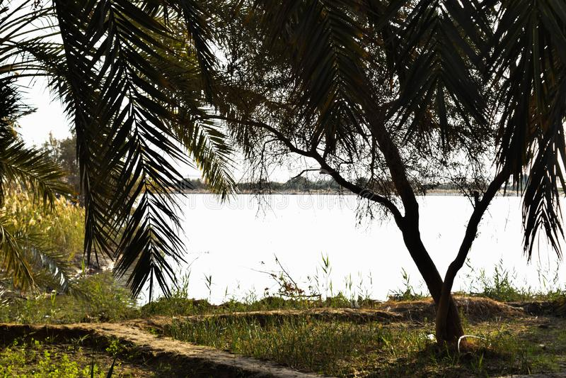 L'Egitto, oasi di Siwa, mare, espone al sole l'insieme, alberi immagine stock
