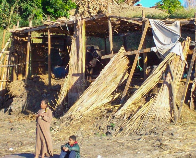 L'Egypte, le Nil, écurie égyptienne, avec le bétail deux précipitations de papyrus d'enfants, enfants dans l'Egyptien indigène de photo libre de droits
