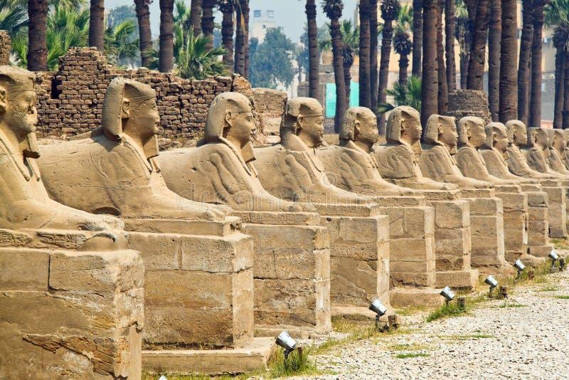 l'Egypte, Luxor, temple d'Amun de Luxor. photos libres de droits