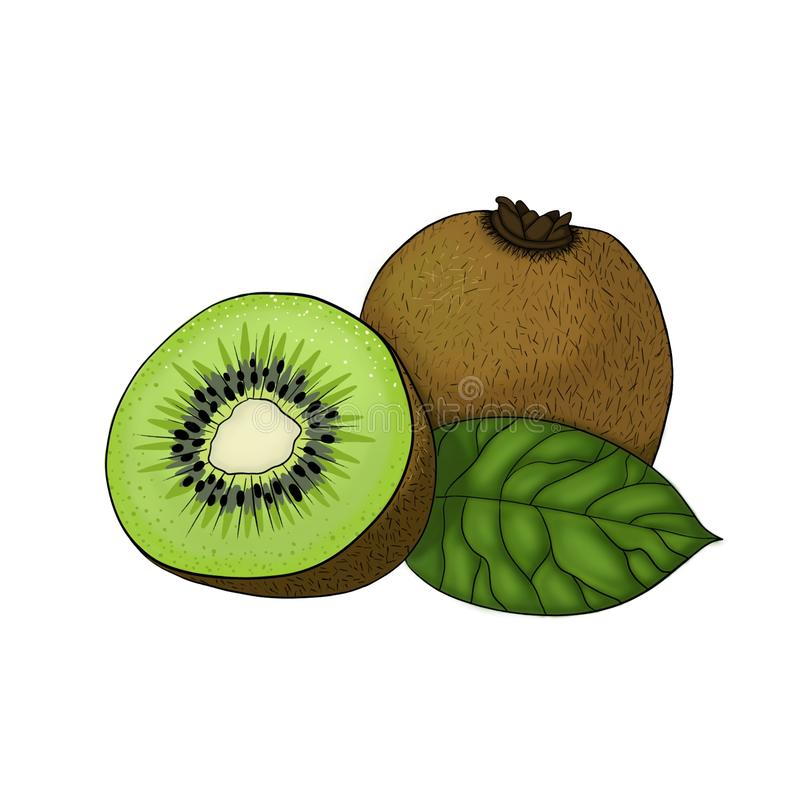 L'elemento sano vegetariano dell'illustrazione dell'alimento del kiwi ha isolato illustrazione di stock