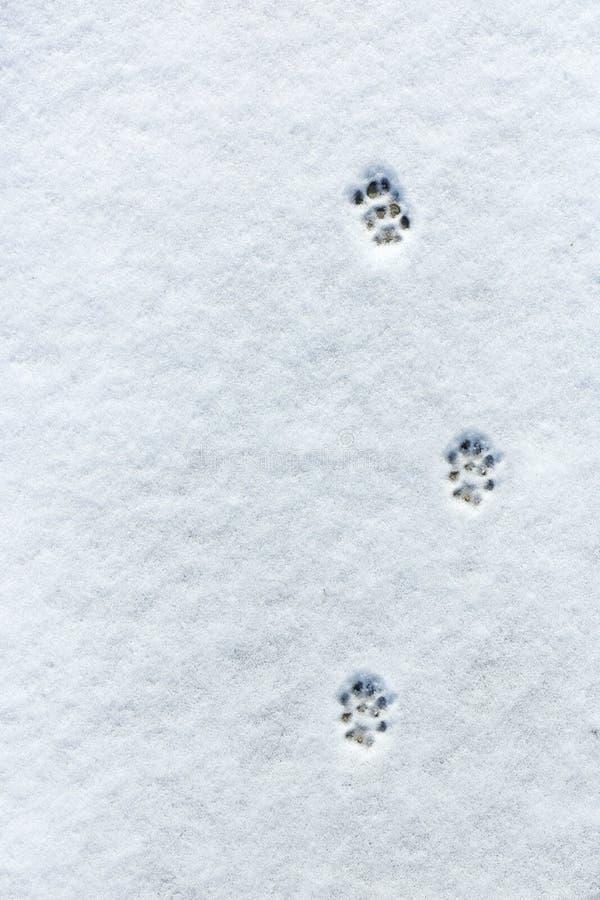 L'empreinte de pas du chat dans la neige photo stock