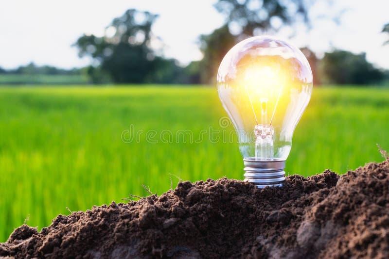 L'energia di concetto della lampadina un'idea ha messo sopra il suolo su natur verde fotografia stock libera da diritti