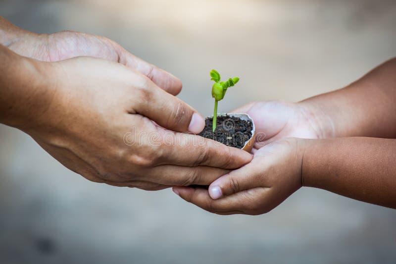 L'enfant avec des parents remettent tenir le jeune arbre dans la coquille d'oeufs ensemble photo libre de droits