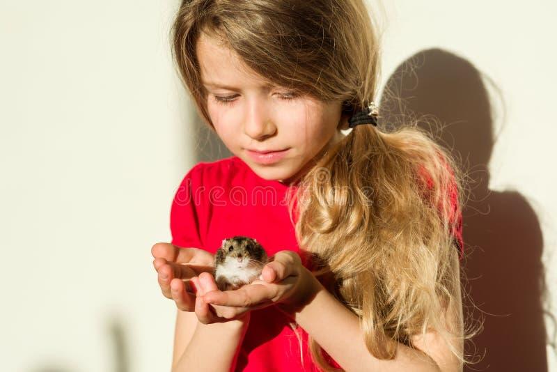 L'enfant de fille 7 années blondes avec de longs cheveux onduleux se tient dans les mains de son animal familier aimé - hamster photos stock