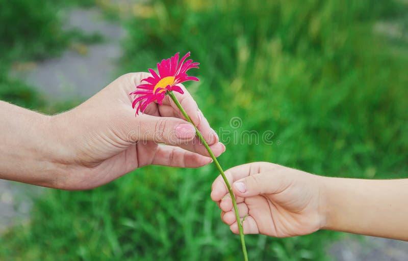 L'enfant donne la fleur à sa mère image libre de droits