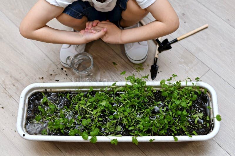 L'enfant a plié ses mains après le jardinage images libres de droits