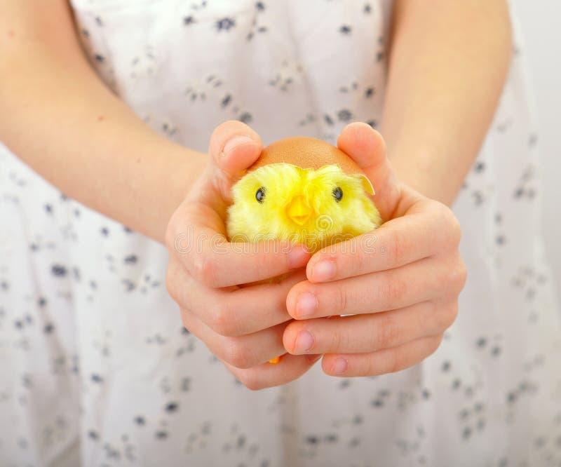 L'enfant retient un poulet dans des ses mains photo libre de droits